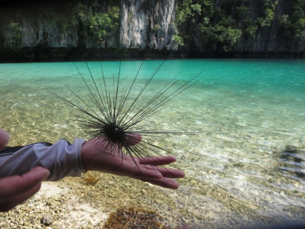 Sea Urchin at big lagoon