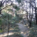 Inside the Binsar Wildlife Sanctuaryq
